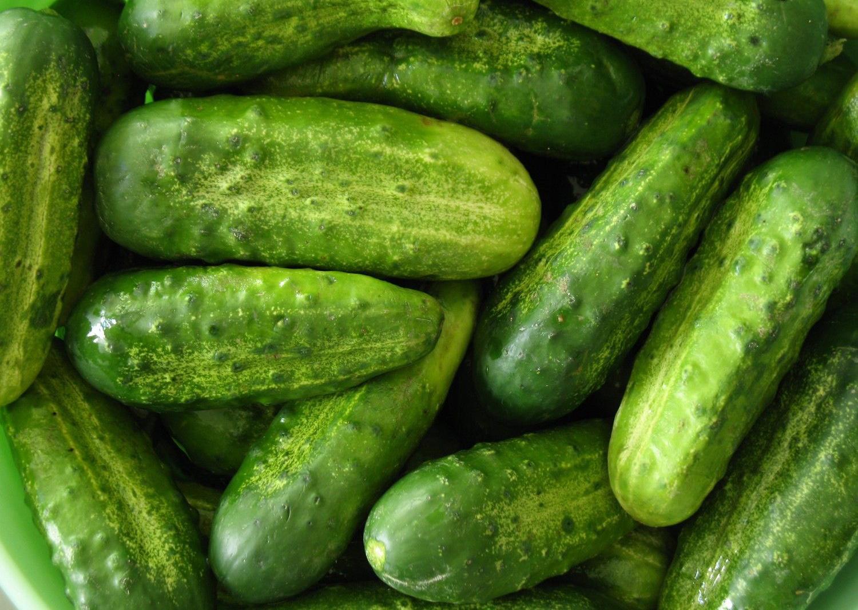 Pepino: un cultivo productivo Pepinos%20166gd